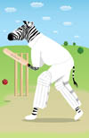 Batting zebra
