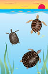 Turtles playing