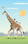Giraffe walking tall